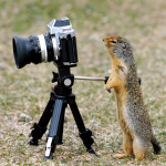 photographing squirrel