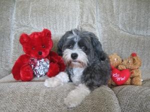 Charlie Bear Valentines Day Love