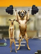 dog with barbells
