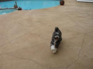 Charlie Bear after Bath 002