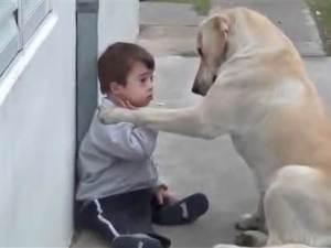 tdy_tren_dogfriend_131002_vembedmed