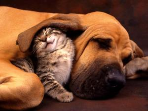 friends. dog and cat