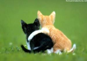 friends.kittens