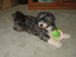 Pets Oct 2011 013