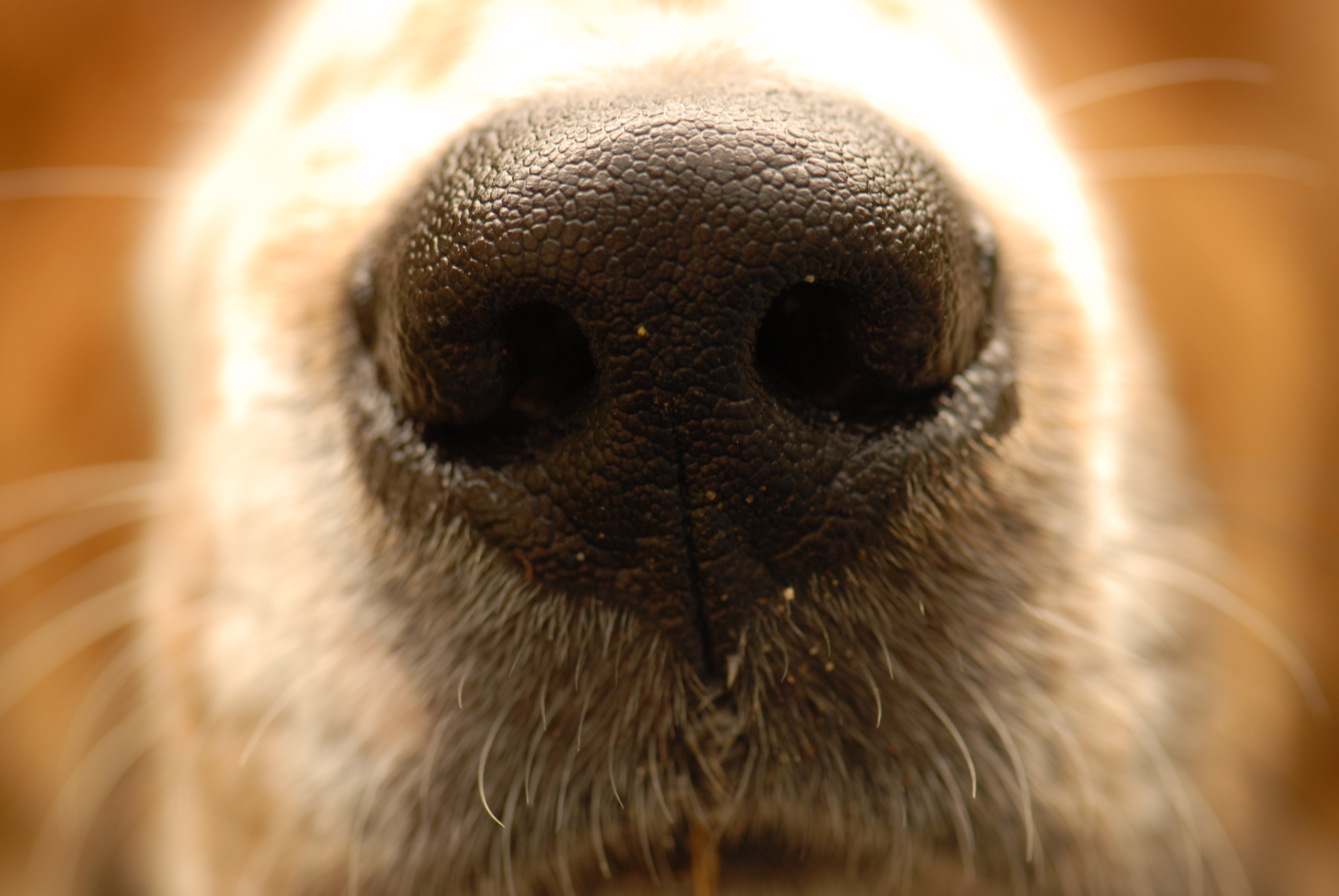 how to tell if your house smells like dog