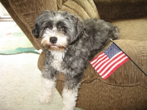 Charlie Bear with American Flag 001