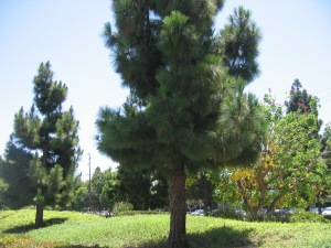 HB Tree 003