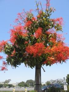HB Tree 006